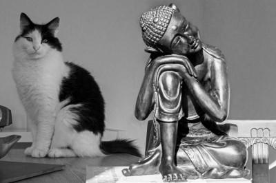 buddha-and-monty